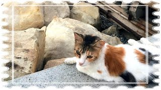 "Александр Щербина ""Куда пропала кошка"" - #игравгорода_ащ"