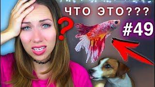 ЧТО СЛУЧИЛОСЬ С МОИМИ ПИТОМЦАМИ ? КОНКУРС #49 | Elli Di Pets
