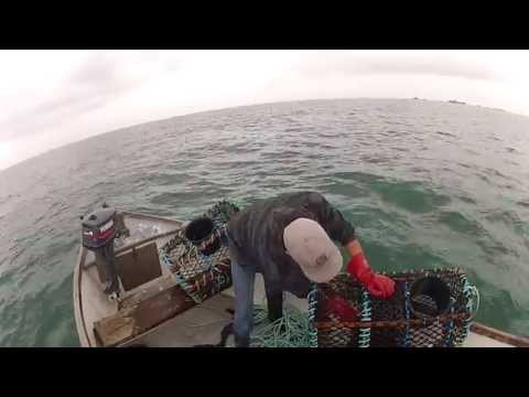 Lobster Fishing In Guernsey