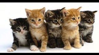 뭐여, 한국 토종 고양이 종류가 이렇게 많어 ㅋ ㅋ