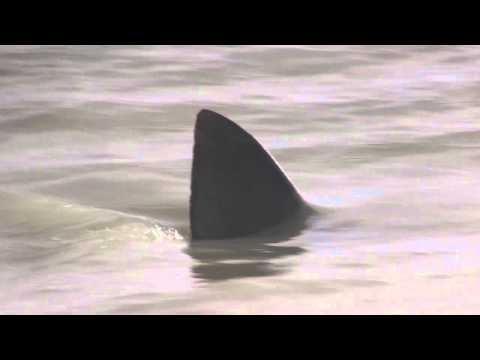 Shark on the Beach: Sanibel Island, Florida