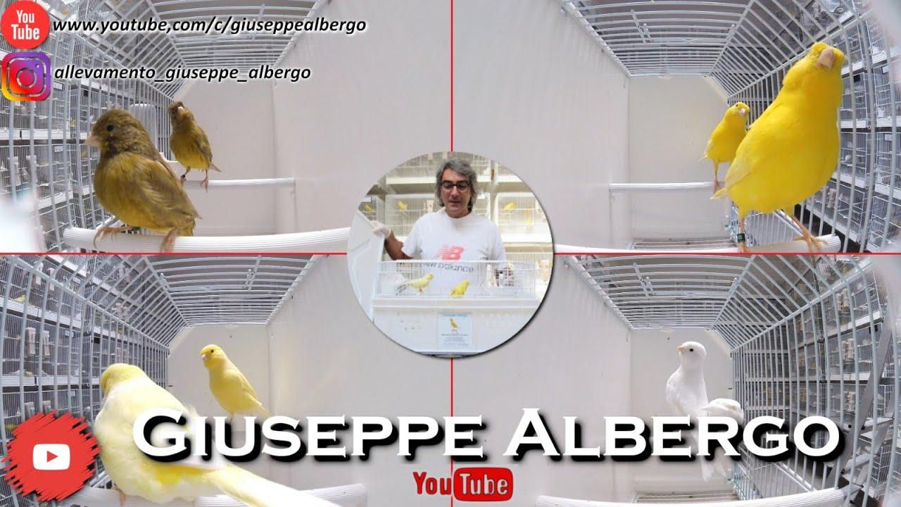 Soggetti 2020 - Giuseppe Albergo