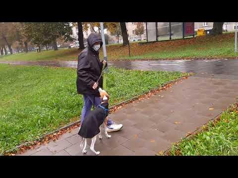 watch?v=3ymlna6UNmc from YouTube