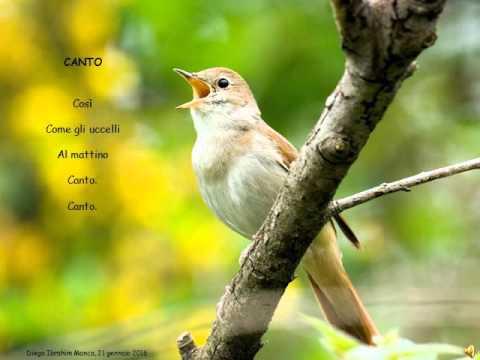 CANTO - Poesia di Diego Manca (Con canto d'usignolo)