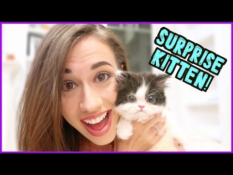 AN AMAZING KITTEN SURPRISE!