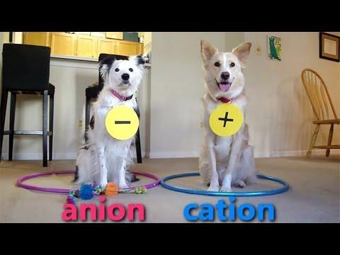 Dogs Teaching Chemistry - Chemical Bonds