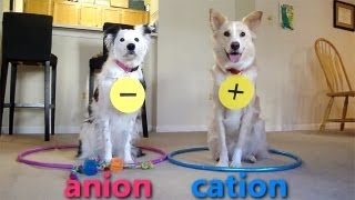 Dogs Teaching Chemistry - Chemical Bonds