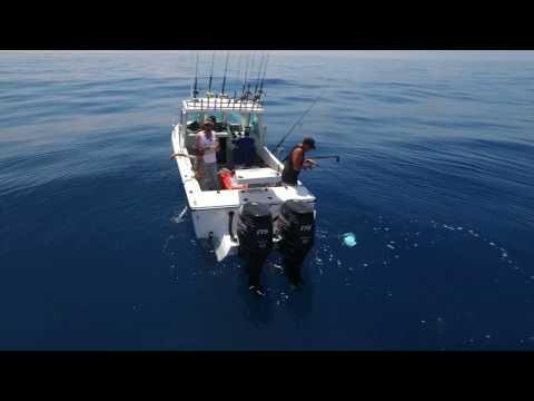 Kingfish Popper Fishing Filmed Via Drone In Victoria