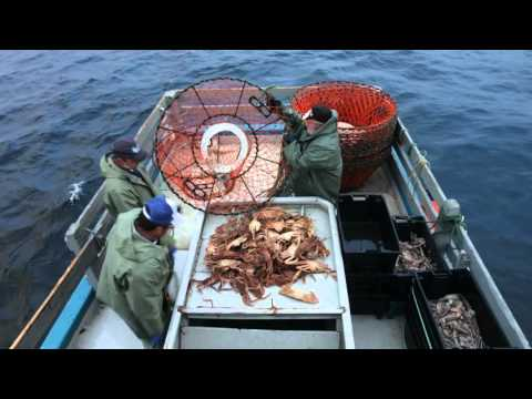 Atlantic Canada Snow Crab