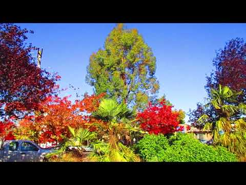360 Degree View of Autumn on Salt Spring Island