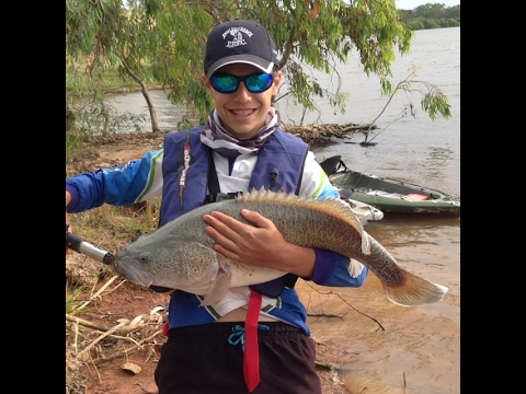 murray cod and yellowbelly fishing part1
