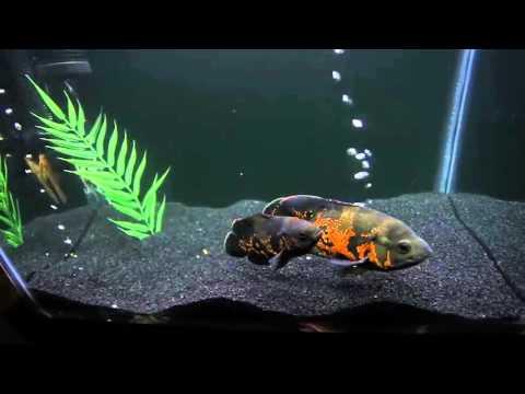 New Oscar Tank (Tahitian Black Moon Sand)