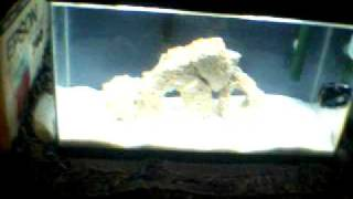 The Start Of My 10 Gallon Nano Reef Saltwater Aquarium