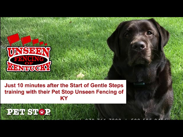 Just 10 Minutes after the Start of Gentle Steps training with their Pet Stop Unseen Fencing of KY