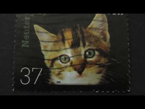 Postage stamp. USA. The cat - man's best friend. 2002. Price 37 cents.