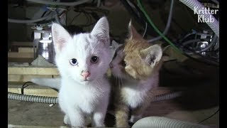 Kittens Play With Dangerous Electrical Wire In The Ceiling | Kritter Klub
