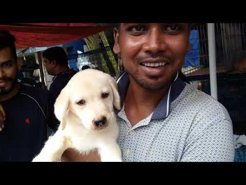Cute Labrador Puppy With His New Friend At Galiff Street Kolkata