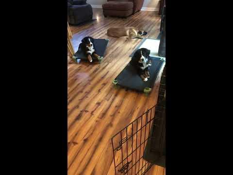 Training Puppies 101