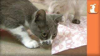 Ridiculous Kittens Attack Wrapping Paper - Kitten Love