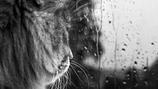 Фрагмент фильма Язык животных