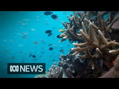 Government pledges $500m to preserve Great Barrier Reef