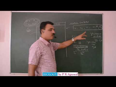 ELECTRON TRANSPORT CHAIN ETS (oxidative phosphorylation)