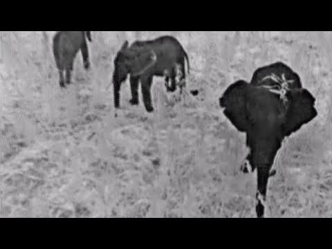 Protecting and Herding Elephants with FLIR Thermal Drones - World Wild Life Fund