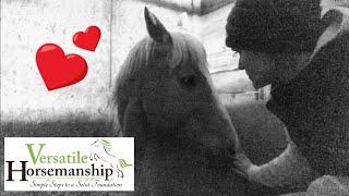 Is it foaling time? // Versatile Horsemanship