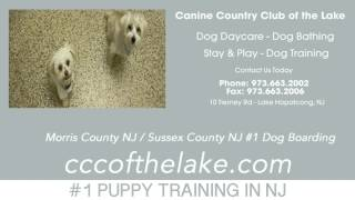 Dog Training Business Sussex County Nj