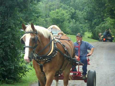 Kathy - Single horse forecart