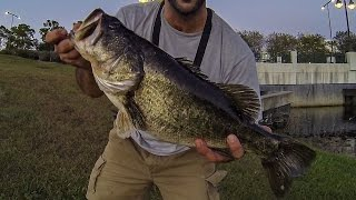 FLORIDA POND BASS FISHING!!! TOPWATER FROG & FLUKE GIANTS FROM SHORE!