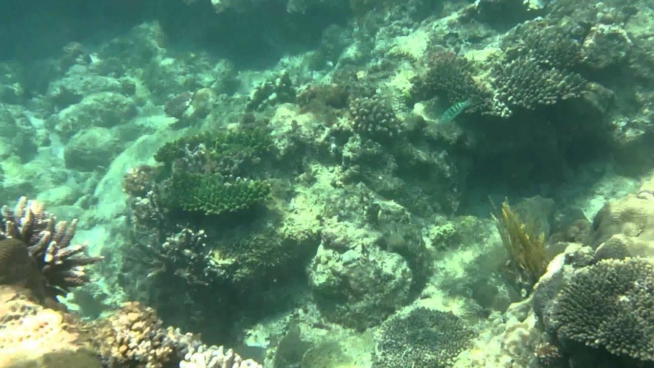 Lặn san hô ở đảo Bình Ba