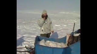 ОХОТА на животных в горах России.HUNTING animals in the mountains of Russia