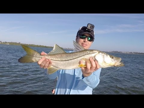 Sarasota Bay Fishing Report - Exploration Trip Catching Snook & Trout