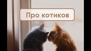 Про котиков thumbnail