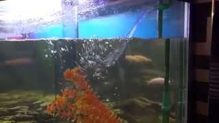 Обслуживание пресноводного аквариума(Подробности на сайте ООО