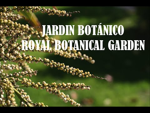 JARDÍN BOTÁNICO DE MADRID / ROYAL BOTANICAL GARDEN OF MADRID