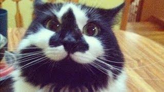 The BEST CATS April
