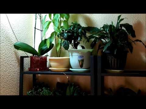 Прожектор светодиодный для комнатных растений