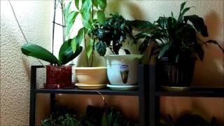 Прожектор светодиодный для комнатных растений(Как организовать лучшую подсветку для комнатных растений в квартире DIY., 2015-09-27T19:07:18.000Z)