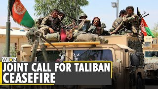 Diplomatic missions and NATO in Afghanistan call for ceasefire with Taliban