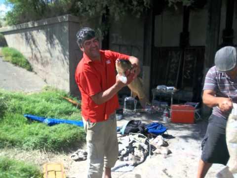 PESCA EN CANAL 15