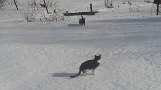 Весна..Коты гуляют.