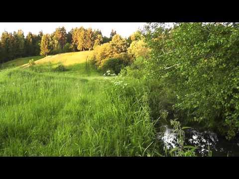 Лето фото, лес, поле, летние пейзажи, русская природа