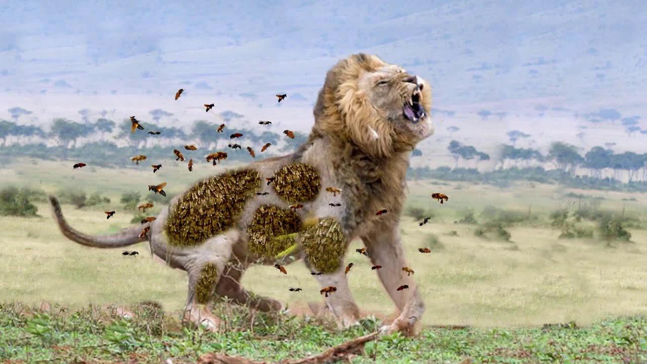 Download TOP 100 Attack of Wild Animals Caught On Camera || Gorilla Leopard Lion Zebra Fight In the Wild