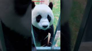 CHINESE FUN Cute Funny Animal Videos Compilation No.17 2018