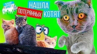 НАШЛА КОТЯТ! ТЕПЕРЬ ОНИ БУДУТ ЖИТЬ С НАМИ | Lost Kitties