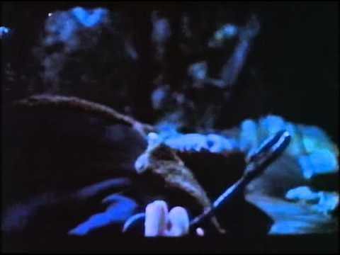Kampokéz videó letöltés