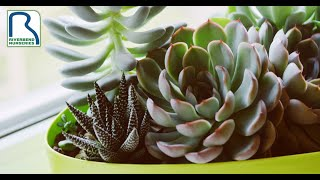 Fresh Stock of Succulents & Care Tips