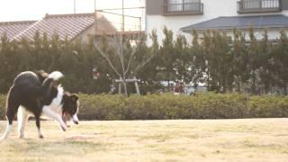 フリスビーとドッグキャッチを練習中。